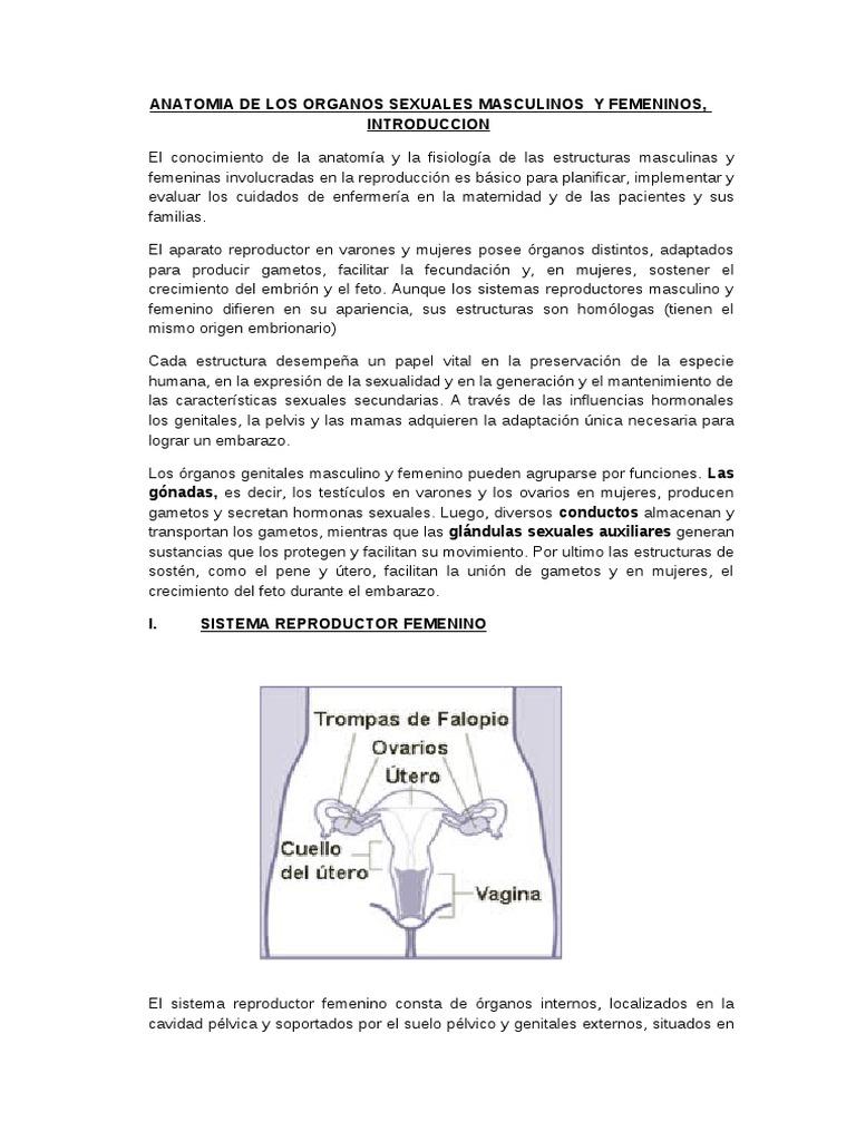 Anatomia de Los Organos Sexuales Masculinos y Femeninos (1)