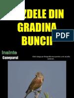 Www.nicepps.ro_8251_Gazdele Din Gradina Bunicii