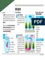Infografia Heladas