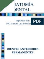 Anatomia Dental Dentición Permanente - Copia
