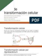 Tipos de transformación celular.pptx