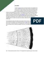 Minute Anatomy of Hevea Bark