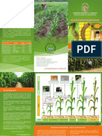 Bio Control Maiz
