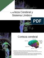 cortezacerebralsistemalimbico13-131030195818-phpapp02