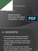 Amaranthaceae (Klp x) (2)