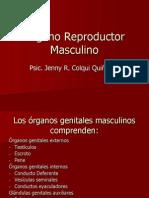 A- Org. Masculino
