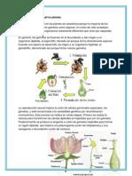 La Reproducción Sexual en Plantas