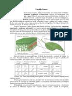 Functiile Frunzei.doc