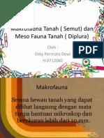 Makrofauna Tanah ( Semut) Dan Meso Fauna Ekky