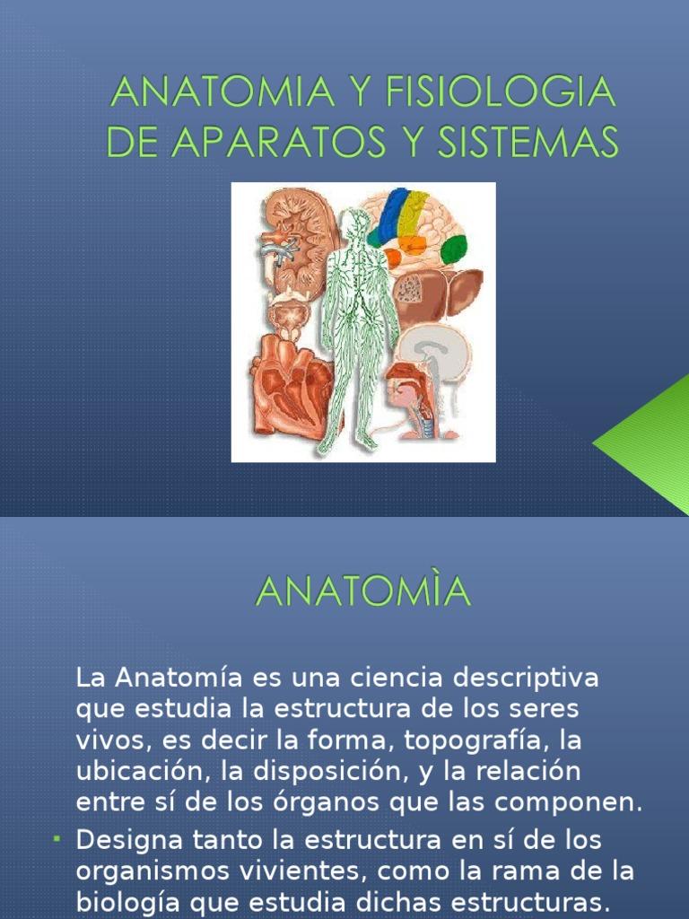 Asombroso Cuál Es La Diferencia Entre La Anatomía Y Fisiología ...