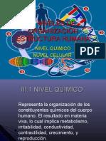Niveles de organización Estructura Humana