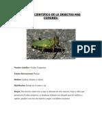 Nombre científico de los animales II.docx
