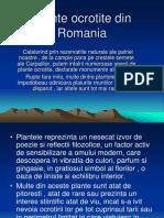 Plante Oc Rot i Ted in Romania