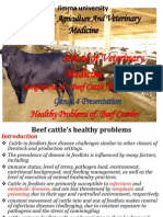 Disease of Beef Cattle 1