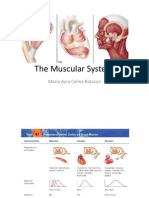 Muscular System.pptx