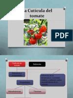 La Cutícula Del Tomate Xmejorado