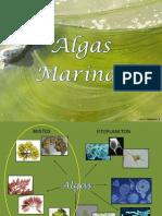 TP 4_ Algas Marinas Bentónicas