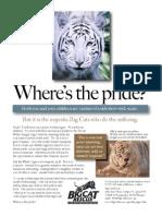 White Tiger Brochure