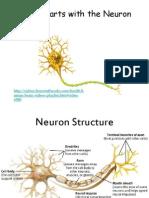 Neuron Notes New