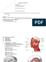 Sinteza - Sistemul Muscular