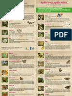 Descriptif Papillon
