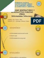 Sindrome Respiratorio y Reproductivo Porcino