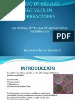 Biotecnolog+ia