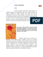 Sistema Nerviso Endocrino.