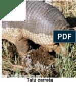 Tatú Carreta