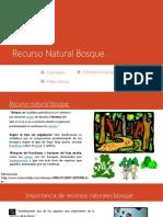 Recurso Natural Bosque