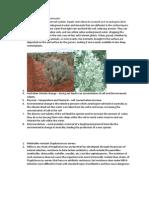 Biology - Salt Bush and MRSA