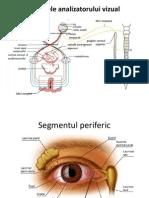 Suport de Curs - Globul Ocular 2