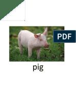 Sam Assignmernt Animals