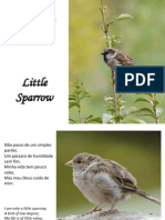 Pequeno Pardal - Little Sparrow