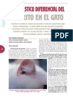 Dermatologia - Prurito en Gato