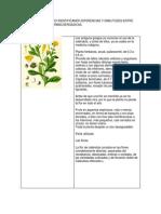 Cuadro Comparativo Identificando Diferencias y Similitudes Entre Caracteristicas Farmacoergasicas Secion Uno