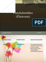 Platyhelminthes (Flatworm)