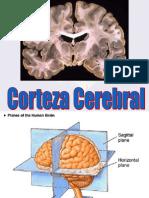 Corteza Cerebral 1