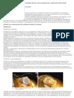 CIRUGIA - Reparacion de Las Lesiones Del Cartilago Articular