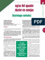 REPRODUCCION - Patologia de La Coneja