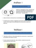 Fase Celular - Anáfase  I.pptx
