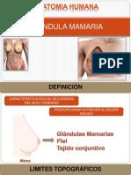 GLÁNDULA MAMARIA.pptx