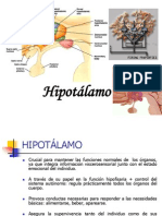 HIPOTALAMO_2012.34