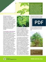 Grow Moringa- Kamunggay