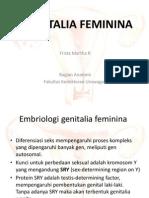 Anatomi Genitalia Feminina