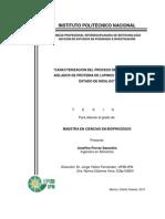 aislado prot lupino Tesis MSc Mexico.pdf