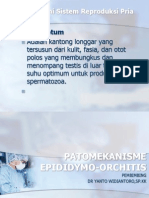 PATOMEKANISME EPIDIaDYMO-ORCHITIS fix2.pptx