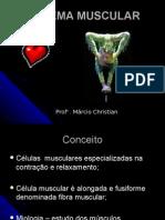 Sistema Muscular Marcio