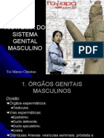 REPRODUTOR MASCULINO