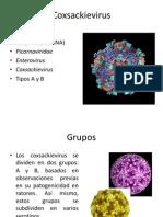 Coxsackievirus.pptx